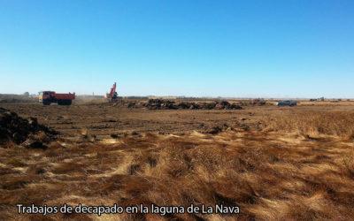(Español) FINALIZAN LAS PRIMERAS SIEGAS Y DECAPADOS EN LA LAGUNA DE LA NAVA