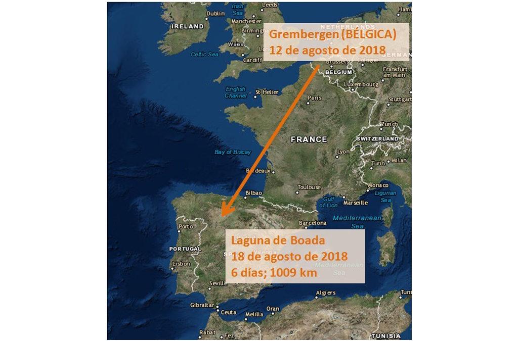 (Español) DE BÉLGICA A LA LAGUNA DE BOADA DE CAMPOS