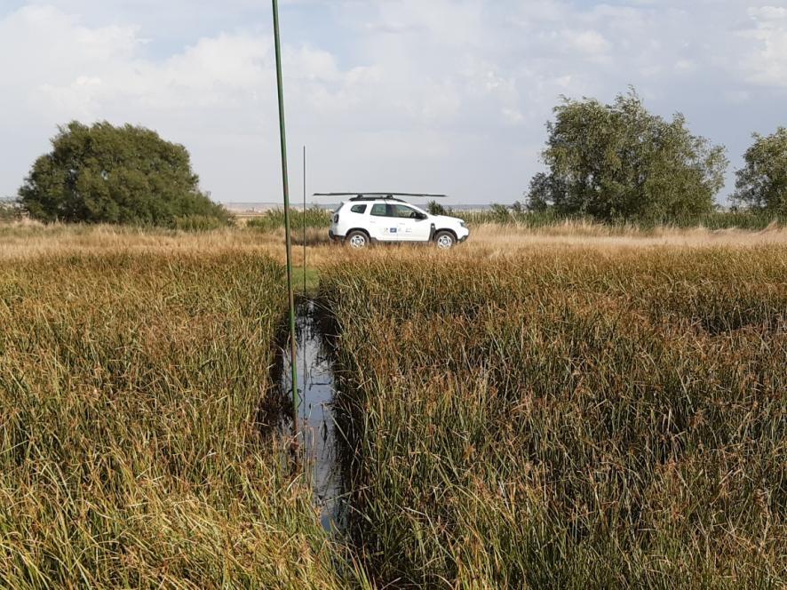 Tareas de desbroce de vegetación palustre y creación de pasillos donde estarán ubicadas las redes de captura de aves. Laguna de La Nava.
