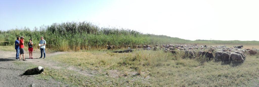 Visita a la ganadería de la Marjal de Pego - Oliva