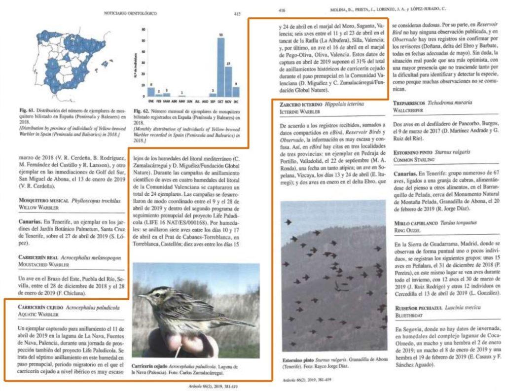 Recorte de la información publicada en el Noticiario Ornitológico.