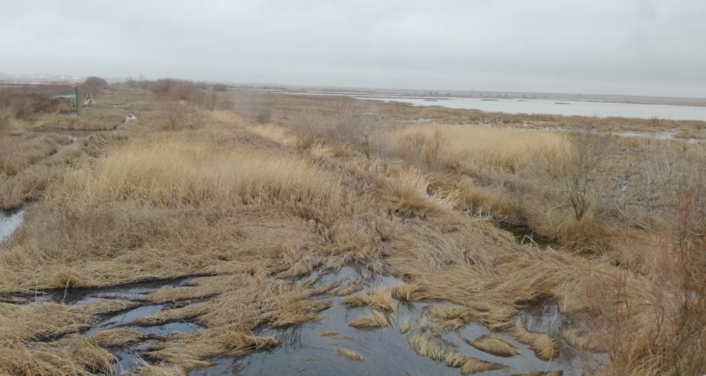 Aspecto de la laguna de La Nava que es considerada un hábitat idóneo para esta especie exótica invasora.