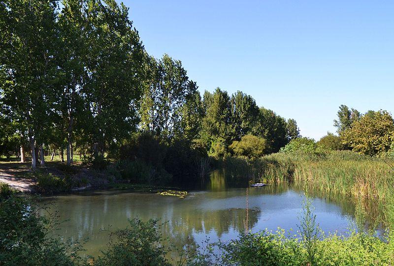 File:Arbres, estany i canyís, marjal de la Safor.jpg