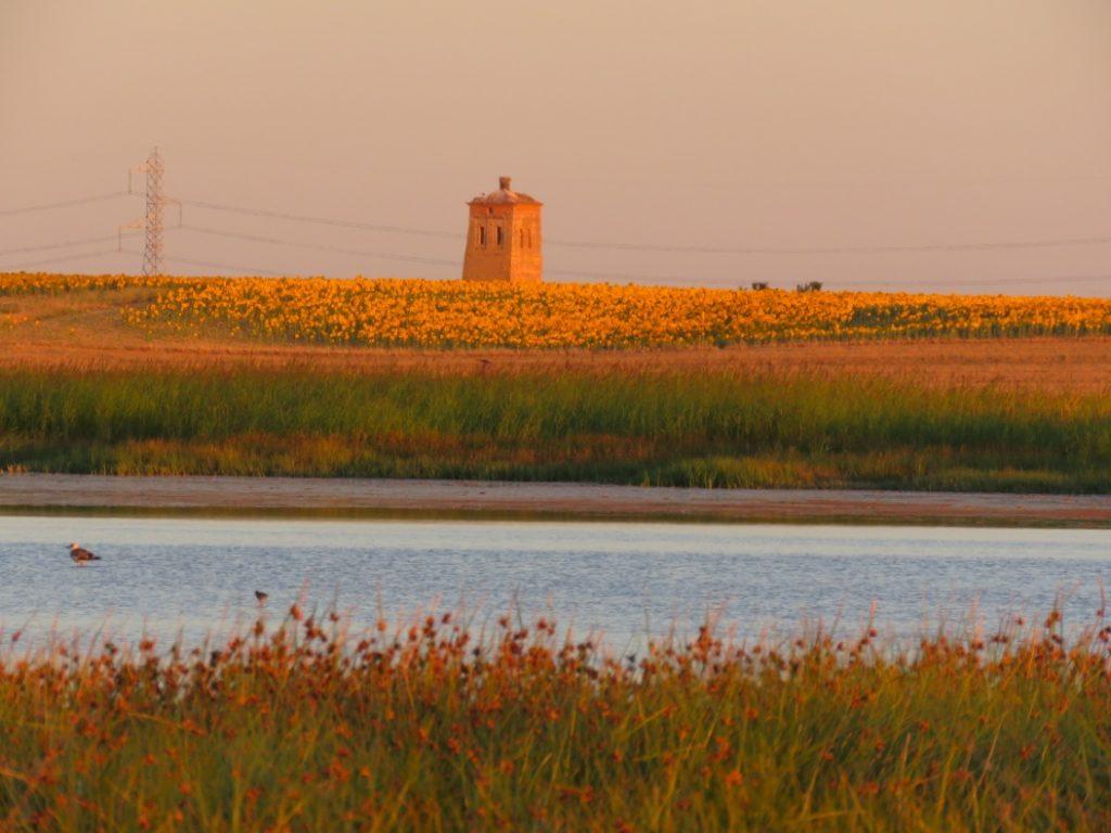 Aspecto de la laguna de Boada (Palencia) a finales de julio de 2019.