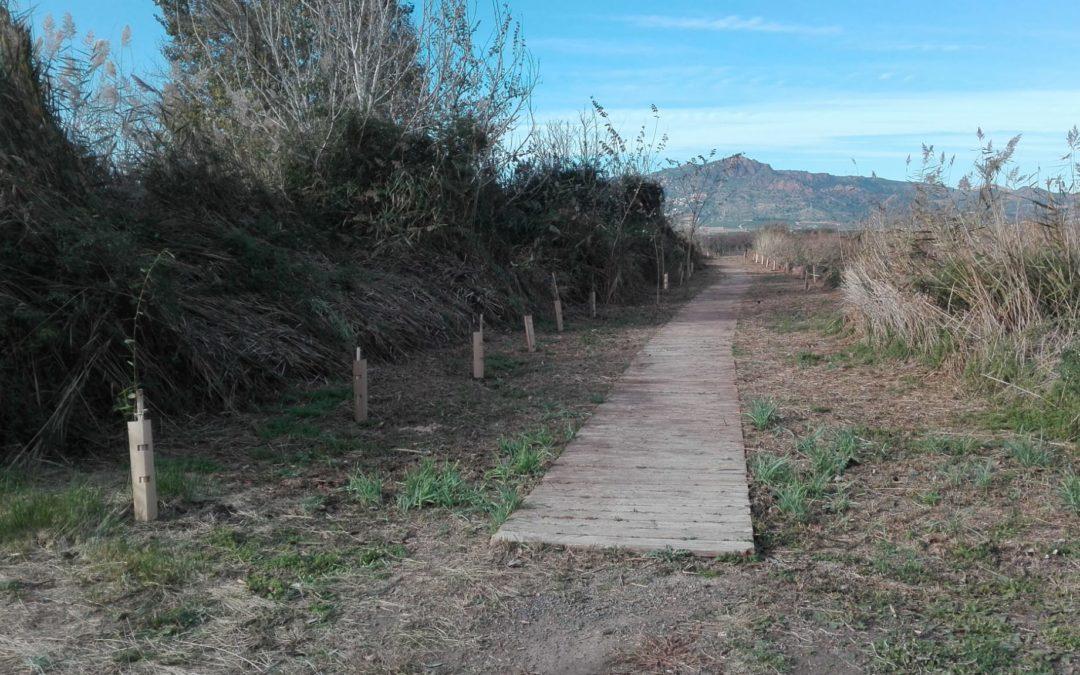 (Español) CONTINUAMOS CON LAS PLANTACIONES