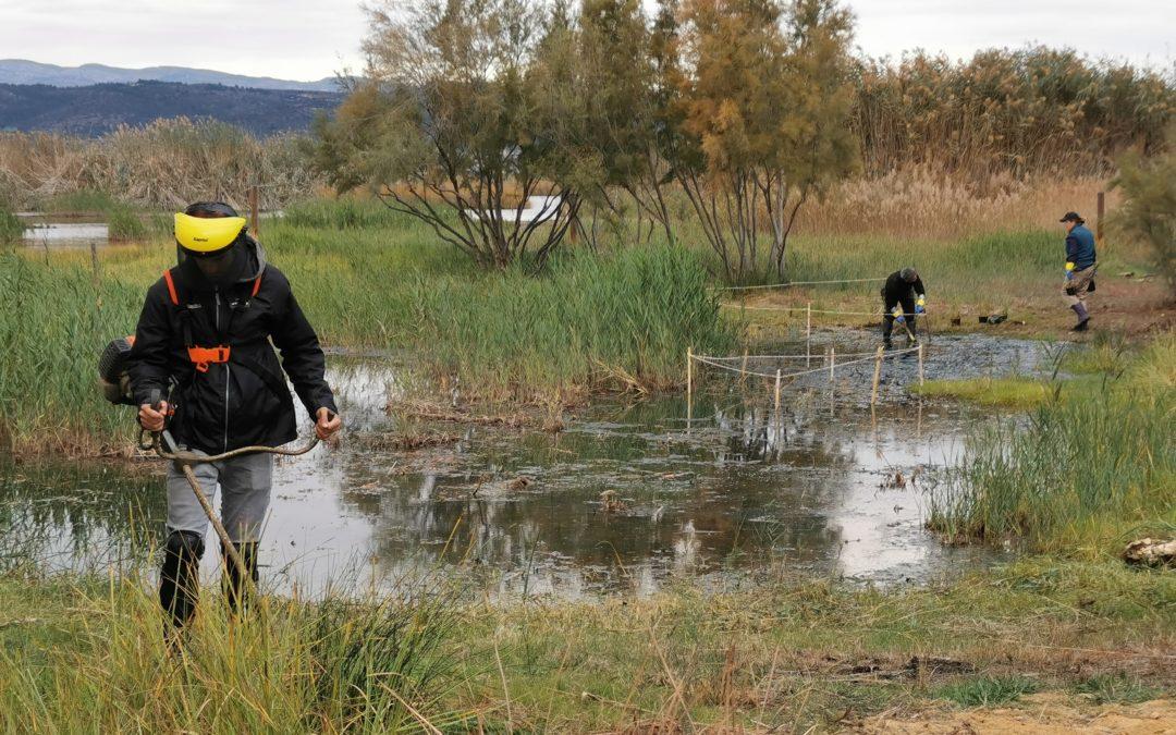 (Español) BALANCE DE LA TEMPORADA DE PLANTACIONES EN LA COMUNIDAD VALENCIANA