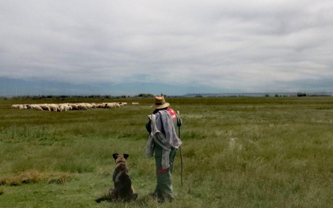(Español) EMPIEZA LA TEMPORADA DE PASTOREO EN LA LAGUNA DE LA NAVA