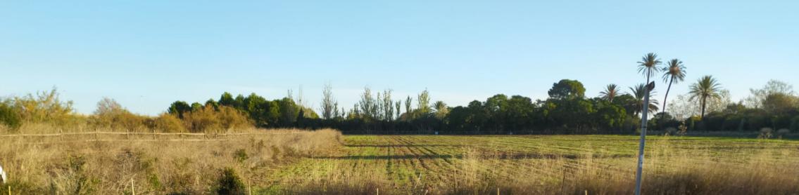 Parcelas de cultivo ecológico de la Unió de Llauradors