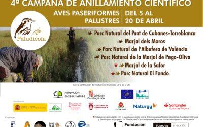 (Español) COMIENZA LA CUARTA CAMPAÑA PRENUPCIAL DE ANILLAMIENTO EN LOS MARJALES VALENCIANOS