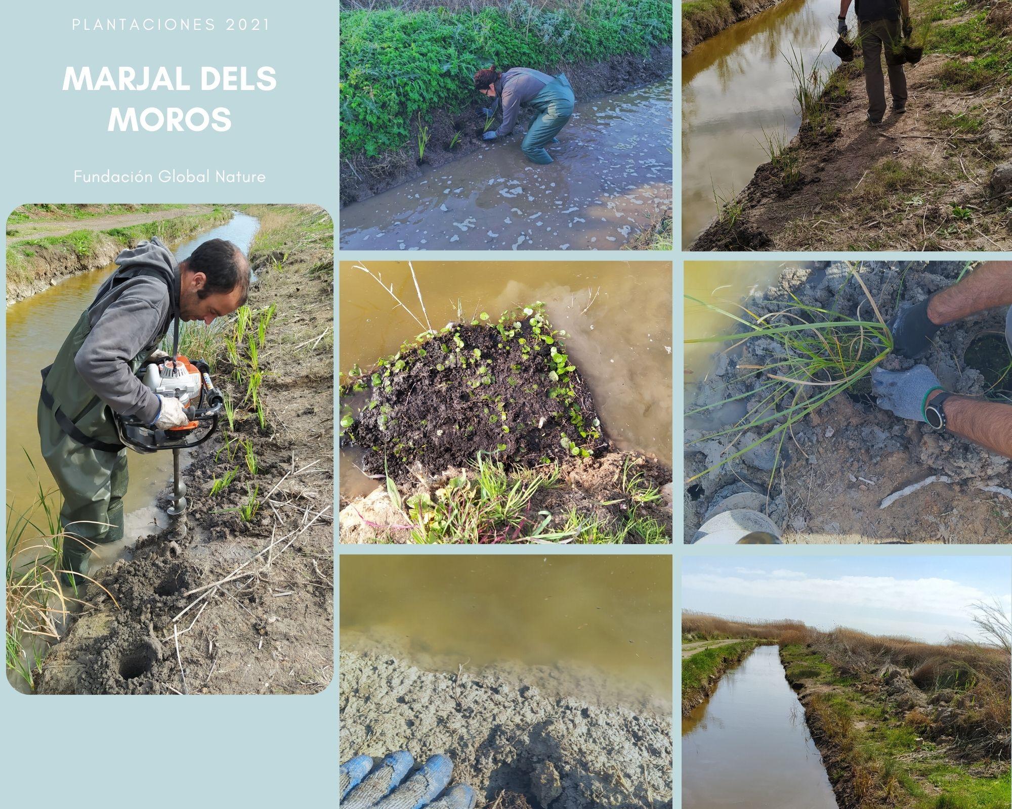 C:\FOTOS_FGN_LIFE_FOTOS\C4_Plantaciones\2021_03_PN MARJAL DEL MORO\Marjal dels moros colage.jpg