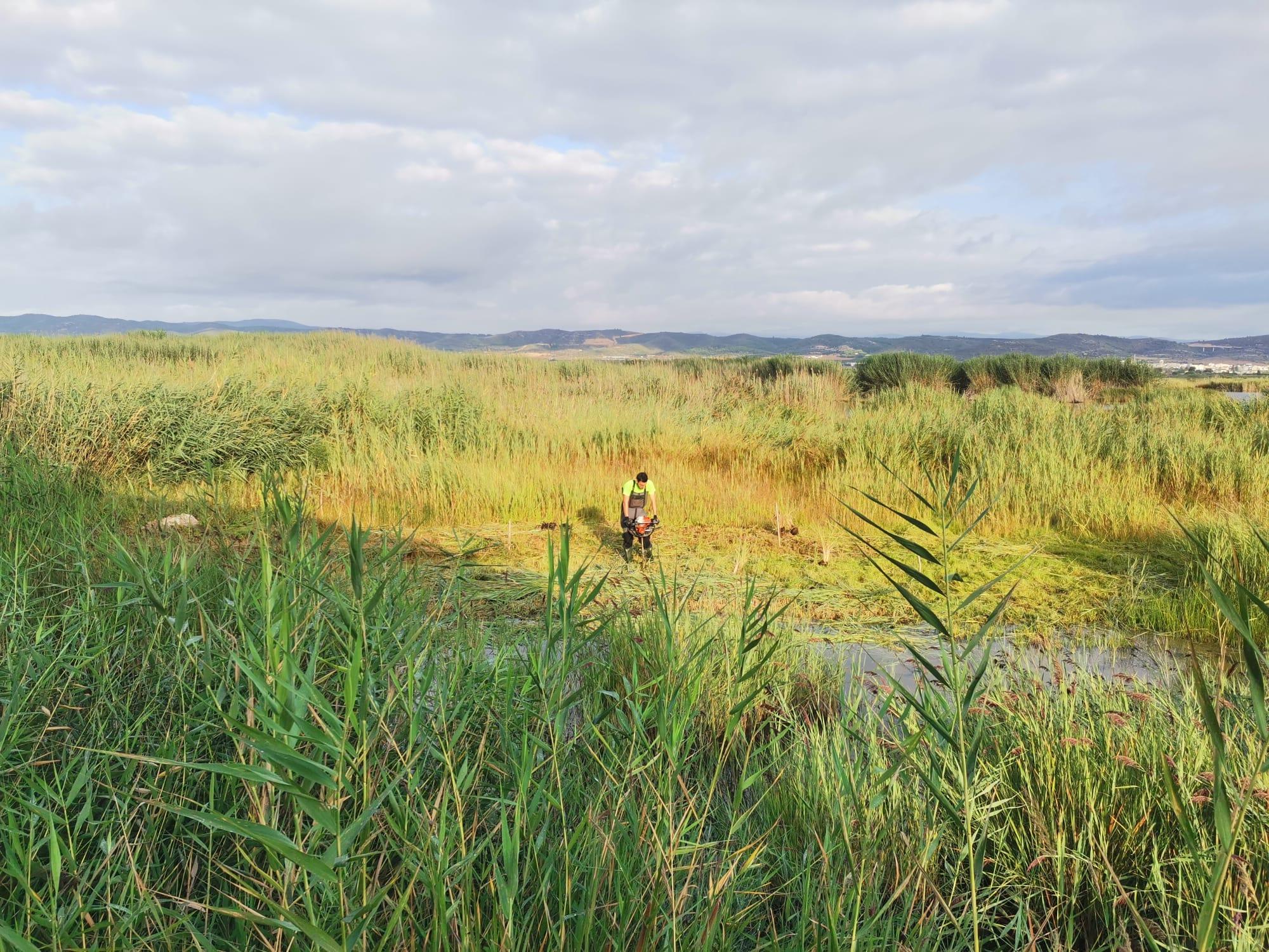 C:\FOTOS_FGN_LIFE_FOTOS\C4_Plantaciones\2021_09_Plantaciones Prat septiembre 2021\IMG-20210831-WA0000.jpg